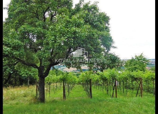 vinice, chmelnice - Hronský Beňadik - Fotografia 1