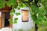 vinice, chmelnice - Hronský Beňadik - Fotografia 9