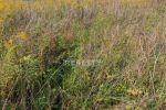 iný stavebný pozemok - Rosina - Fotografia 3