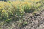 iný stavebný pozemok - Rosina - Fotografia 5