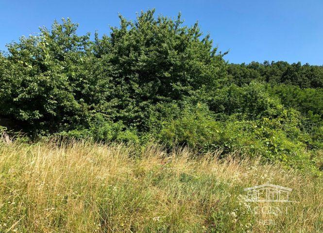 rekreačný pozemok - Borský Svätý Jur - Fotografia 1