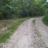 Lesné pozemky, Opava, 9229 m²