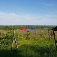 Neobrábaný vinohrad - Pezinok - Fajgalská cesta, lokalita Narpochy - 14,4 ára