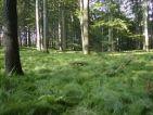 Predám les v okolí Lučenca