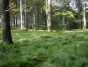 Na predaj Lesy !