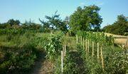 kunareality- vinohrad s chatkou na pozemku 400 m, lokalita  Mlynárska hora, Hlohovec