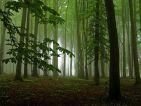 Na predaj Dubový les