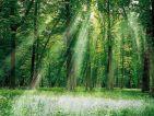 Na predaj Dubový les 50 ha BB Kraj