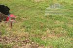 Stavebný pozemok Vyšné Malatíny – Bešeňová 5km, 15€/m2