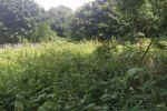 Na predaj lukratívny stavebný pozemok Borinka - iba 20 km od BA - 2000 m2 - nádherné tiché prostredie