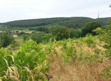 INSURIAREAL !!!AKCIA!!! Predám stavebný pozemok v m. č. Bratislava III -Vinohrady.