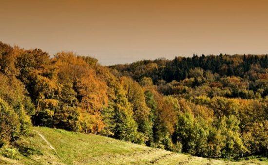 ARTHUR - Stavebný pozemok pod lesom, Koliba-Briežky, 724 m2