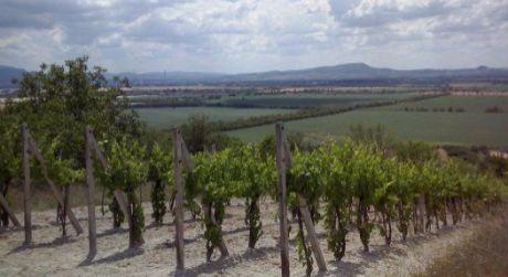 Na predaj vinica pri Štúrove