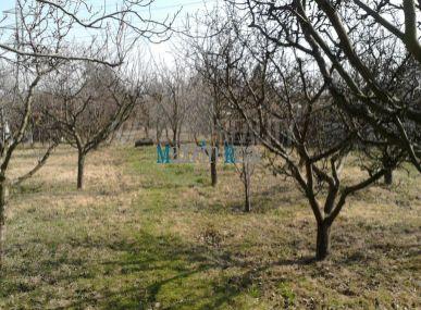 Záhrada,stromy, chatka,predaj Žabí Majer 8árov.