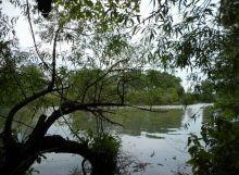 Lesné pozemky  na brehu Malého Dunaja