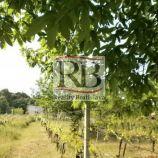 Vinohrad na predaj, Častá, okres Pezinok