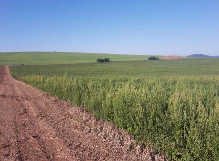 Orná pôda 1,13 ha v obci Ludanice