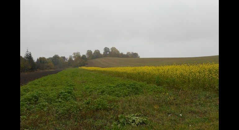 Pozemok v obci Slávnica, časť Podhorie, 2222 m2