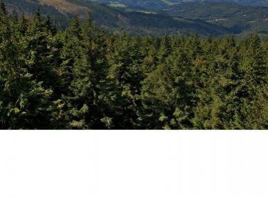 MAXFIN REAL - ponúkame na predaj les - hora v peknom prostredí južného Slovenska.