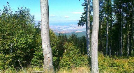 Na predaj lesné pozemky v katastri Kovarce