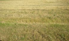 Predáme ornú pôdu registra E v obci Čukárska Paka Okres Dunajská Streda s rozlohou 27000m2