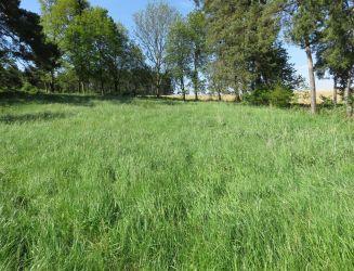 Pozemok s borovicovým hájom neďaleko Turčianskych Teplíc - Bodorová, rozloha 6 374 m2, predaj