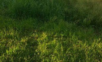 Bývanie v parku? Krásny pozemok 3 x 725m2 len  8km od priemyselného parku NR-SEVER!, obec Nové Sady-časť. KOTRBÁL
