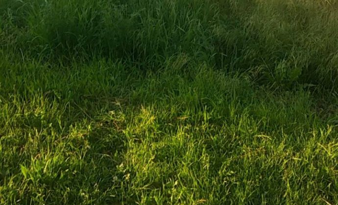 Krásny pozemok 3 x 725m2 len  8km od priemyselného parku NR-SEVER!, obec Nové Sady-časť. KOTRBÁL