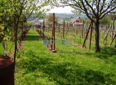 MAXFIN REAL – vinica - k.ú. Levice
