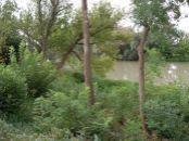 Ponúkame na predaj pozemky v Jelke priamo pri Dunaji