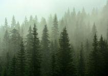Ihličnatý les 200ha  na predaj - Liptov
