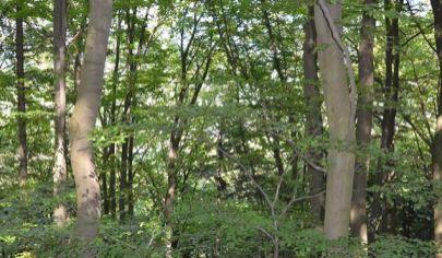 SLOVENSKÉ PRAVNO - lesné pozemky s rozlohou 60 877m2, okr. Turčianske Teplice