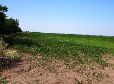 MAXFIN REAL - Predaj pozemku v obci Reca, Senec, 2340 m2