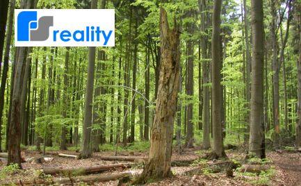 velký lesný pozemok